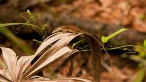 Lizard Stock Photos