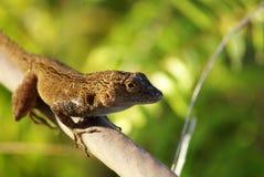 Lizard. A little lizard on a cable Stock Photo