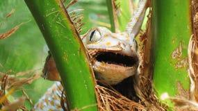 Lizard. A lizard between the trucks in green backdrop Royalty Free Stock Photos