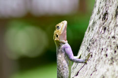 Lizard of all colors on a trunk Royalty Free Stock Photos