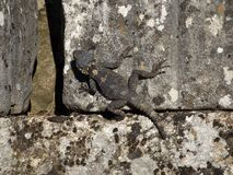 Lizard on the ancient stone Stock Photo