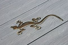 Lizard background Stock Photography