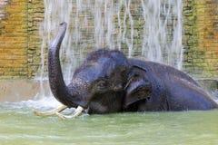 Bathing elephant Royalty Free Stock Photography