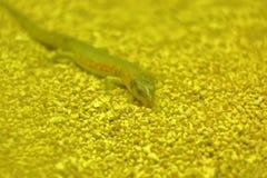 Lizard in Beijing Wildlife Park royalty free stock photo
