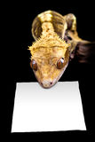 Lizard with blank sign Royalty Free Stock Photography