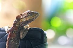Lizard and bokeh Stock Photo