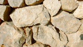 Lizard on boulders 1 royalty free stock photo