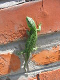 Lizard on bricks. Green lizard sitting on the bricks on a clear day stock image
