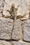Lizard. stock photos