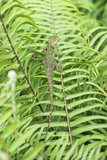 Lizard Camouflage Royalty Free Stock Images