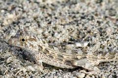 Lizard Camouflage Stock Photography