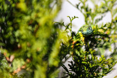 The lizard camouflaged Royalty Free Stock Photos