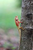 Lizard climb on tree Stock Photo