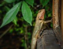 Lizard climbing a street lamp Stock Photos