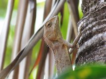 A lizard climbing on tree in the garden. stock image