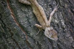 A lizard is climbing on a tree. royalty free stock photo