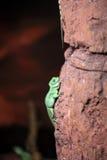 Lizard climbing up the rock Stock Photos