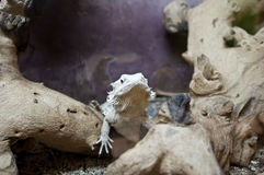 Lizard close up stock photo