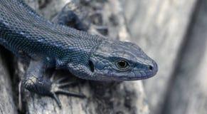 Lizard clouse up summer time. Macro eye Stock Image