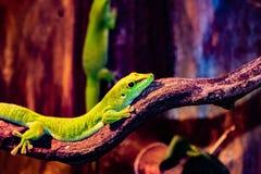 Lizard in Copenhagen Zoo. Denmark. Canon Eos 200D royalty free stock photo