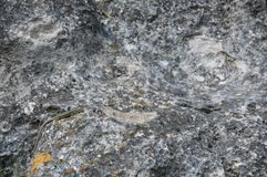 Lizard crawling on the rock. Wildlife. Animals. Nature. Climb. Natural background stock photography