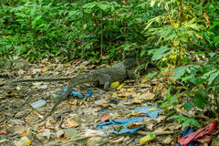 lizard among debris in the forest, environment, pollution of the planet Stock Photo