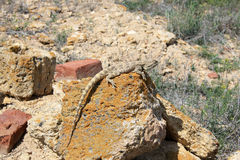 Lizard in desert of Central Asia, Kazakhstan Stock Photo