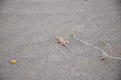 Lizard in disguise Stock Photo