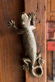 Lizard door knob Stock Image