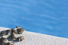 Lizard on  pool royalty free stock photo