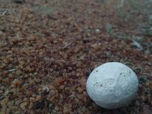 Lizard egg stock images