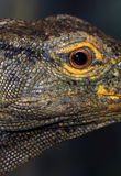 Lizard Eye. Close Up Detail Of Monitor Lizard Eye Royalty Free Stock Photos