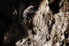 Lizard on a tree trunk royalty free stock photos
