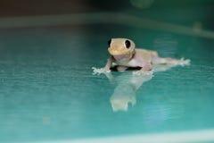 Lizard on floor Stock Photos