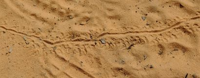 Lizard footprints in the sand trails, detailed close up macro in red cliffs desert reserve in by St George Utah, USA. Small Lizard footprints in the sand trails Stock Image