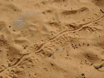 Lizard footprints in the sand trails, detailed close up macro in red cliffs desert reserve in by St George Utah, USA. Small Lizard footprints in the sand trails Stock Photo