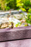 Lizard in Garden Stock Photos