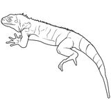 Lizard is goanna silhouette on a white background. Vector illustration Stock Photos