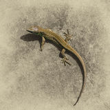 Lizard on a gray natural background Stock Image