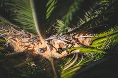 Lizard green grass plants above reptile background high angle view. Lizard in green grass plants from above reptile background high angle view Stock Photography