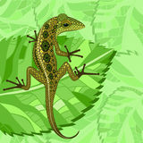 Lizard in the green Royalty Free Stock Photography