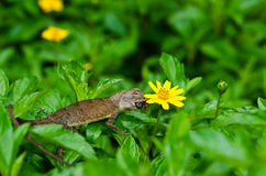 Lizard in green nature Stock Images