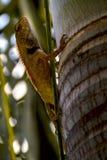 Lizard. Green palm tree kuala lumpur Royalty Free Stock Image