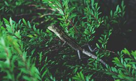 Lizard on green plant