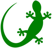 A lizard in green shadow Stock Images