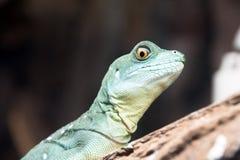 Lizard head Stock Photography