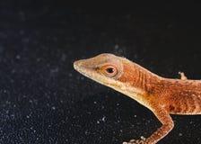 Lizard head shot Stock Image