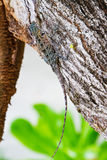 Lizard hiding on the trunk Royalty Free Stock Images