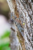 Lizard hiding on the trunk Stock Photo