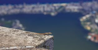 Lizard, at high heights, on Mount Corcovado. The lizard in the foreground and in the second one is seen, the city of Rio de Janeiro, in all its splendor Royalty Free Stock Photo